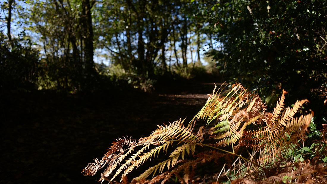 Bois saint mars de coutais nantes sud